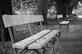 bench-2638591